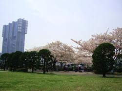090408_sakura