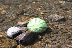 090817_watermelon